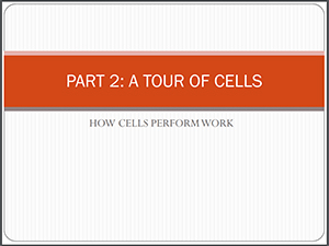 How Cells Perform Work Presentation